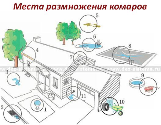 Места размножения комаров