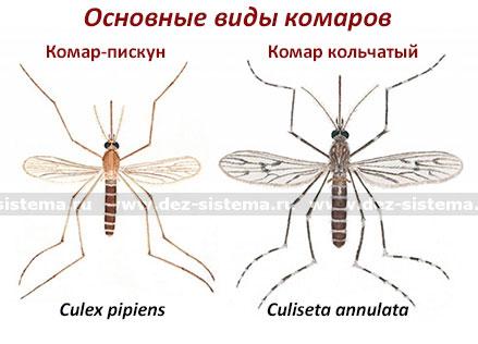 Основные виды комаров