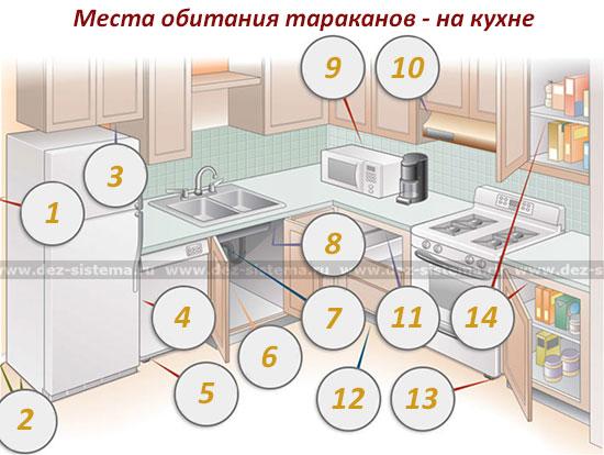 Места обитания тараканов - на кухне