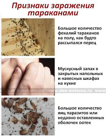 Признаки заражения тараканами